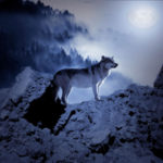 image: wolves stabilize climate
