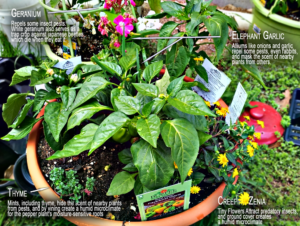 image: a garden planting guide kit.