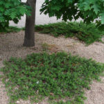 image: shade garden plants
