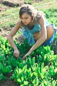 image: edible landscaping