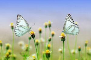 image: natural gardener
